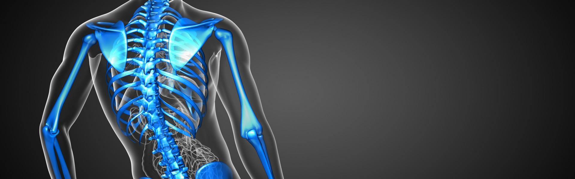 3d render medical illustration of the skeleton bone - back view